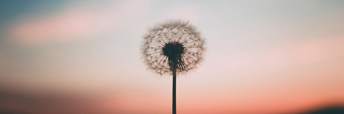 怎么找寻快乐